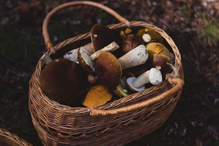 Eekhoorntjesbrood, een supergezonde paddenstoel